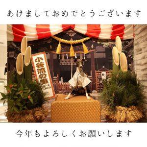イッタラの2019-福袋1